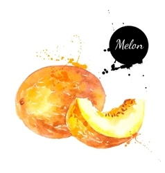 Hand drawn watercolor painting melon on white vector image