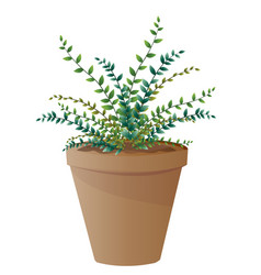 spider plant with pot vector image vector image