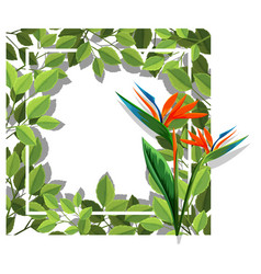 A bird of paradise frame vector