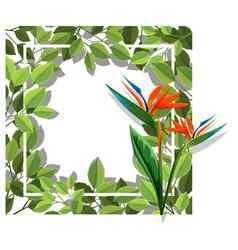a bird of paradise frame vector image