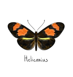 Butterfly Heliconius Watercolor imitation vector image