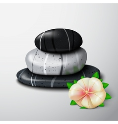 Spa stones with tropical flower vector image
