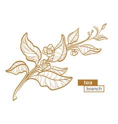 tea branch 1 vector image