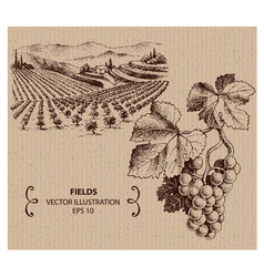vineyard landscape vector image