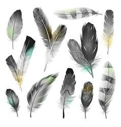 Black And White Feathers Set vector image vector image