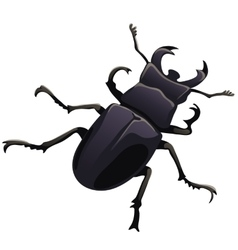 Black beetle stag on a white backgroun vector