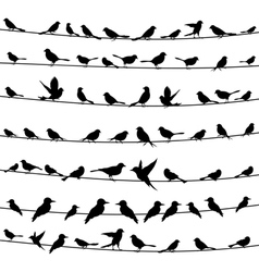 Bird on a wire4 vector image