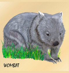 Fluffy young motley wombat on the grass isolated vector