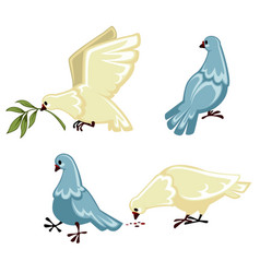 grey and white pigeons in motion on white vector image