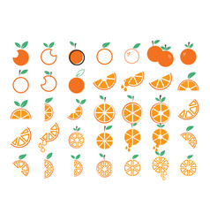 orange fruit collection set graphic design vector image