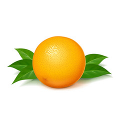 ripe juicy orange with green vector image
