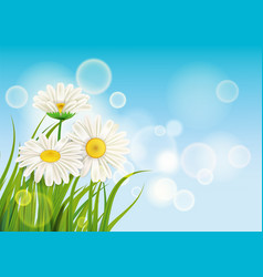 spring daisies background fresh green grass vector image