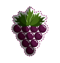 Sticker grape cluster icon image vector