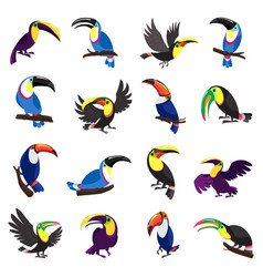 toucan icons set cartoon style vector image