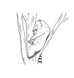 small bear known as coati vector image vector image