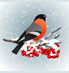 Bullfinch sitting on snow covered branch of vector