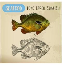 longear fish sketch for restaurant signboard vector image