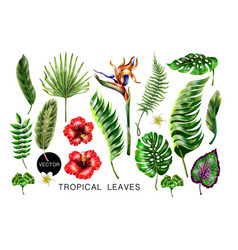 Set of realistic tropical flowers and leaves vector