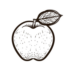 sketch red apple with leaf coloring book vector image