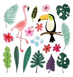 Summer tropical graphic elements toucan and vector