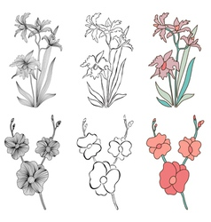 decorative orchids vector image vector image
