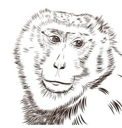 Chimpanzee drawing Animal artistic use vector