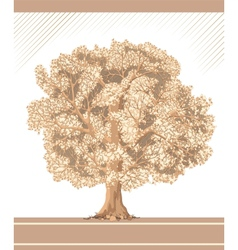 Detailed graphic sepia tree vector image