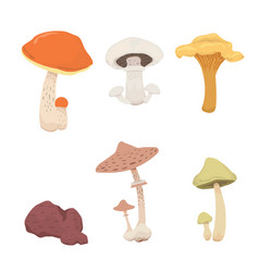 mushroom nature cook food different kinds of vector image