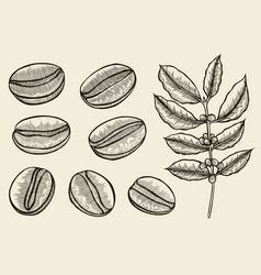 coffee branch plant vector image