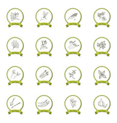 hand drawn sketch vegetable set vector image vector image