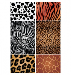 Animal print patterns vector