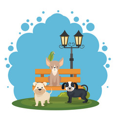 cute dogs in the park scene vector image