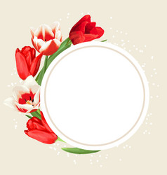 frame with red and white tulips beautiful vector image