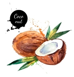 Hand drawn watercolor painting fruit coconut on vector