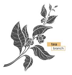 tea branch silhouette vector image