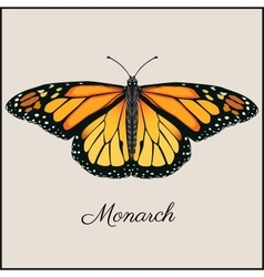 Monarch butterfly card Flat vector image vector image