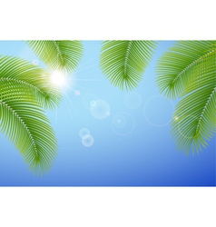 Sunny blue sky and palm branches vector image vector image