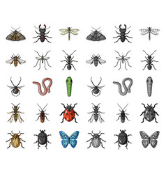 Different kinds of insects cartoonmono icons in vector