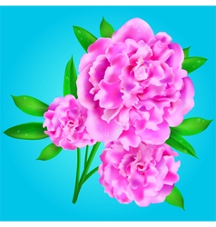 Peony vector image vector image