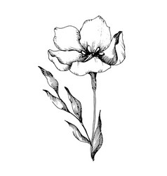 Flax floral botanical flowers black and vector