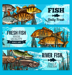Fresh fish sketch banners for market vector