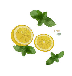 Lemon lime and mint ink sketch set vector