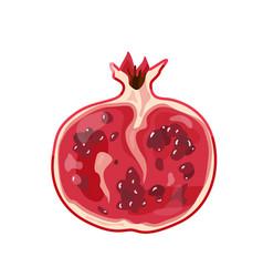 Red half pomegranate fruit in bright color cartoon vector