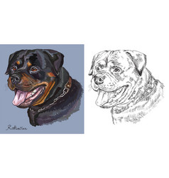 Rottweiler colorful and monochrome hand drawing vector