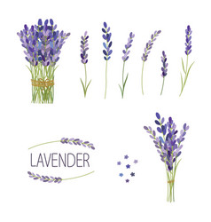 set of lavender flowers elements collection of vector image