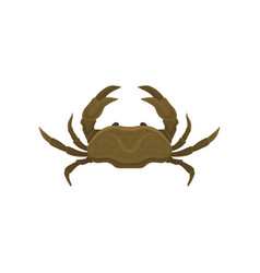 Small brown crab with big claws marine animal vector