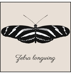 Zebra longwing butterfly card vector