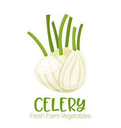 celery isolated on white background vector image
