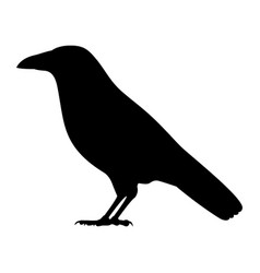 black silhouette a crow vector image