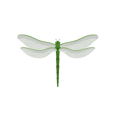 flar icon of beautiful dragonfly with long vector image